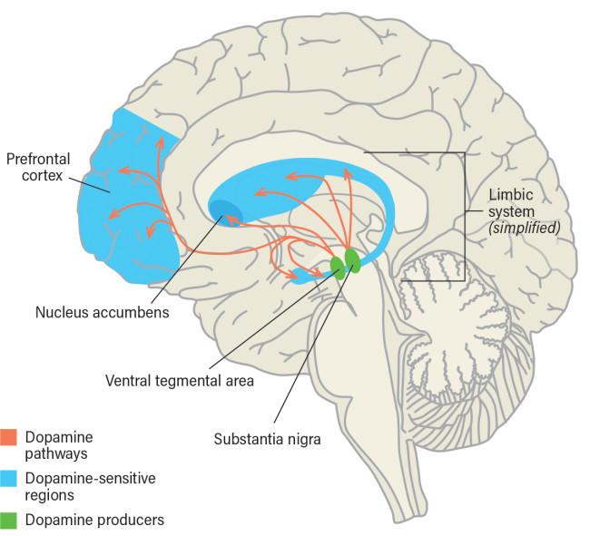 Smartphone Addiction Effect on Brain - Mackey/Discover