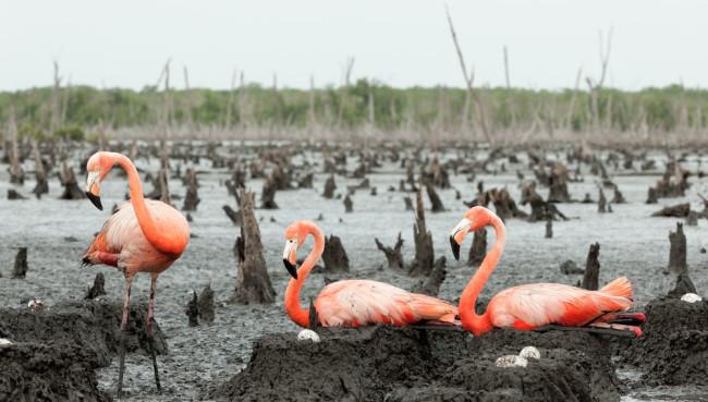 FlamingoNest.jpg