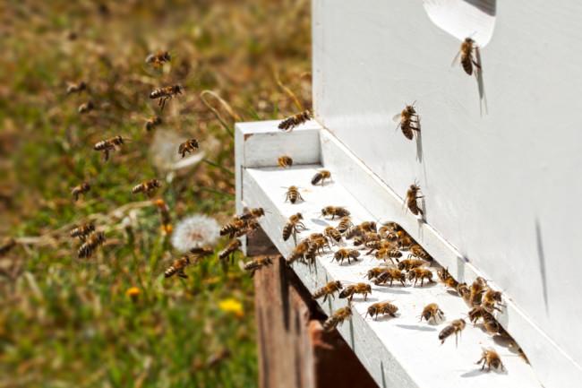 bee-hive.jpg