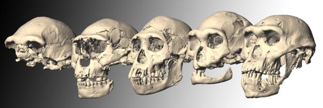 skull-series