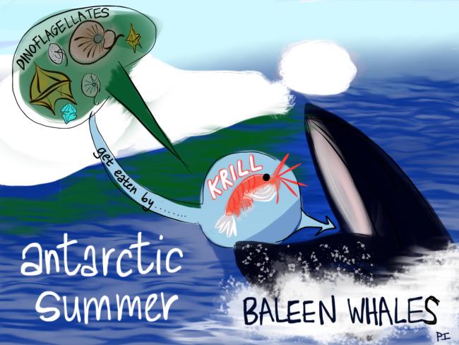 Antarctic-Summer-1024x768.png