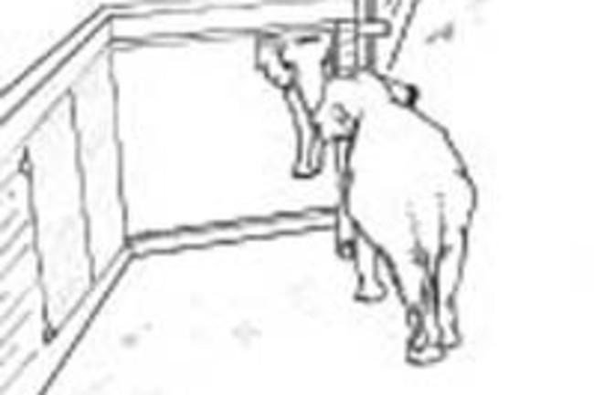 Mirrorelephants.jpg