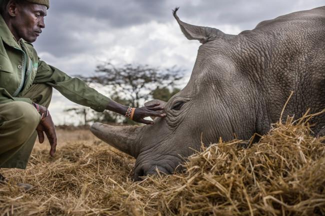 Peter Esegon and Najin Rhino - Justin Mott
