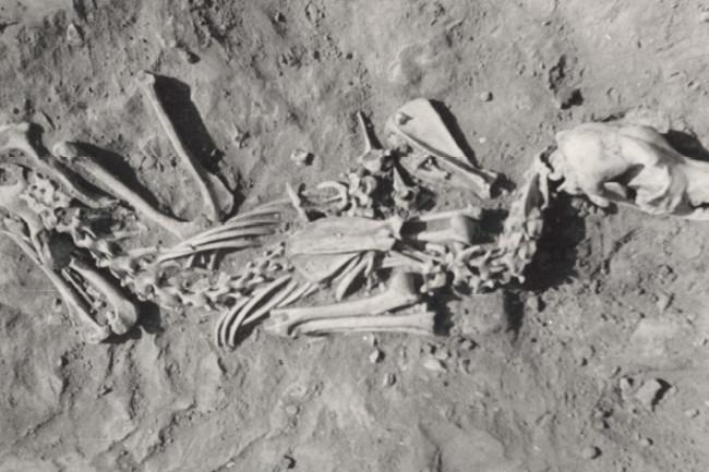 Dog-Burial-2.jpg
