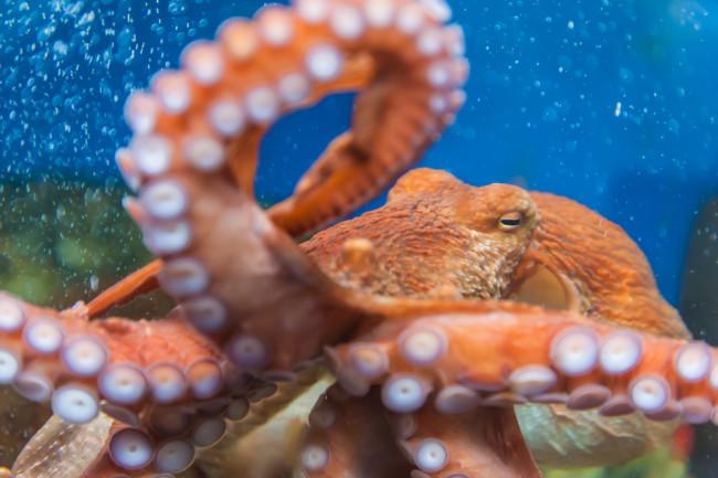 Octopus - Shutterstock