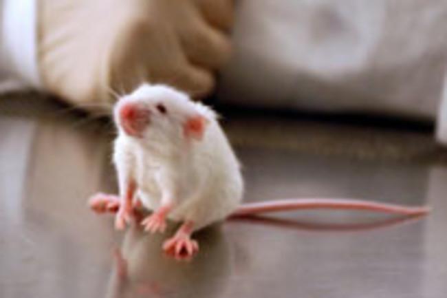 lab-mouse.jpg