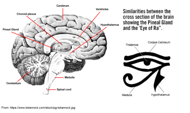 Pineal vs. Eye of Horus - https://www.tokenrock.com/stock/pg-tokenrock.jpg