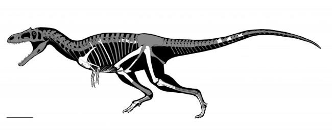 huesos-gualicho6-1024x402.jpg