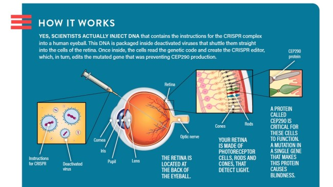 crispr injection
