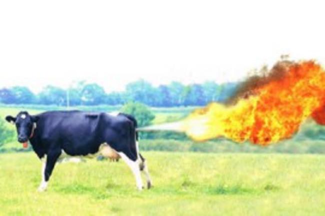 cowfart-300x180.jpg