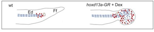 Freitas-hand-diagram.jpg