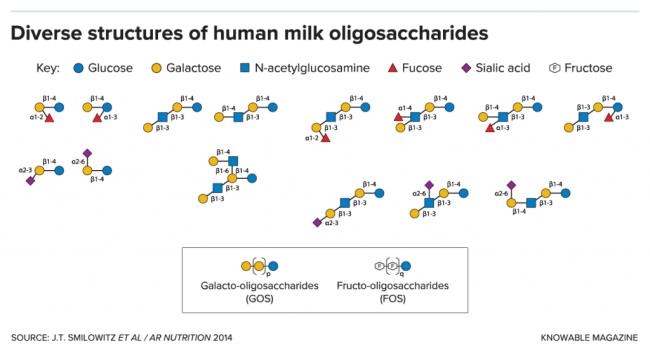 G-human-milk-oligo-structures-alt-1024x555