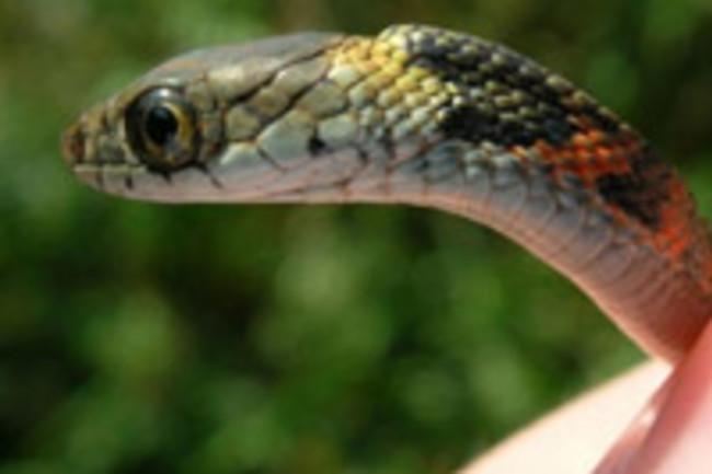 20070130_snake.jpg