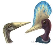 pterosaur-2.jpg