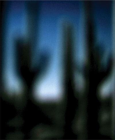 cactusfuzzy.jpg