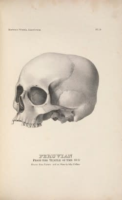 A hand-drawn skull, lacking its jaw bone, labeled plate nine, Peruvian, from the Temple of the Sun, drawn from Nature and on Stone by John Collins.