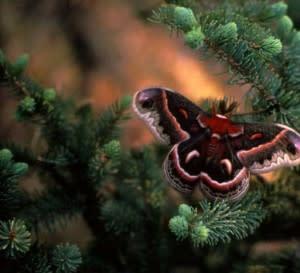 butterfly-top-300x273.jpg