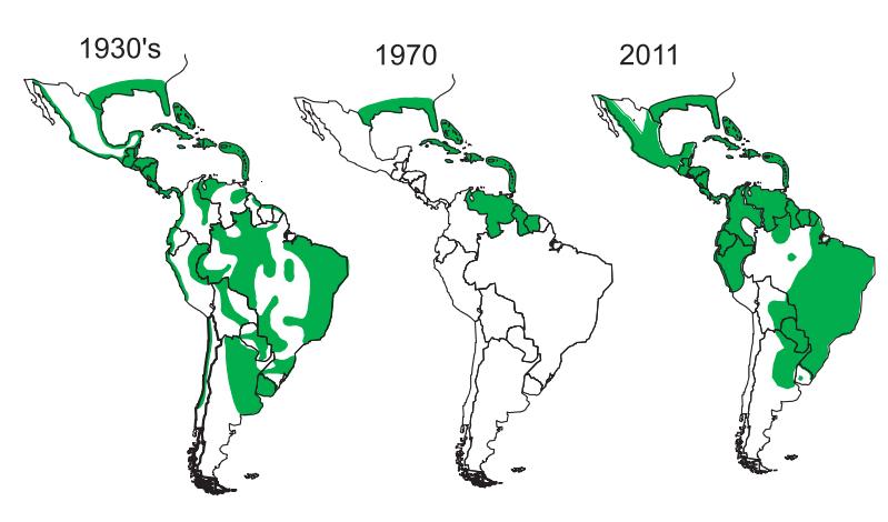 reforestation_aedes_aegypti.jpg