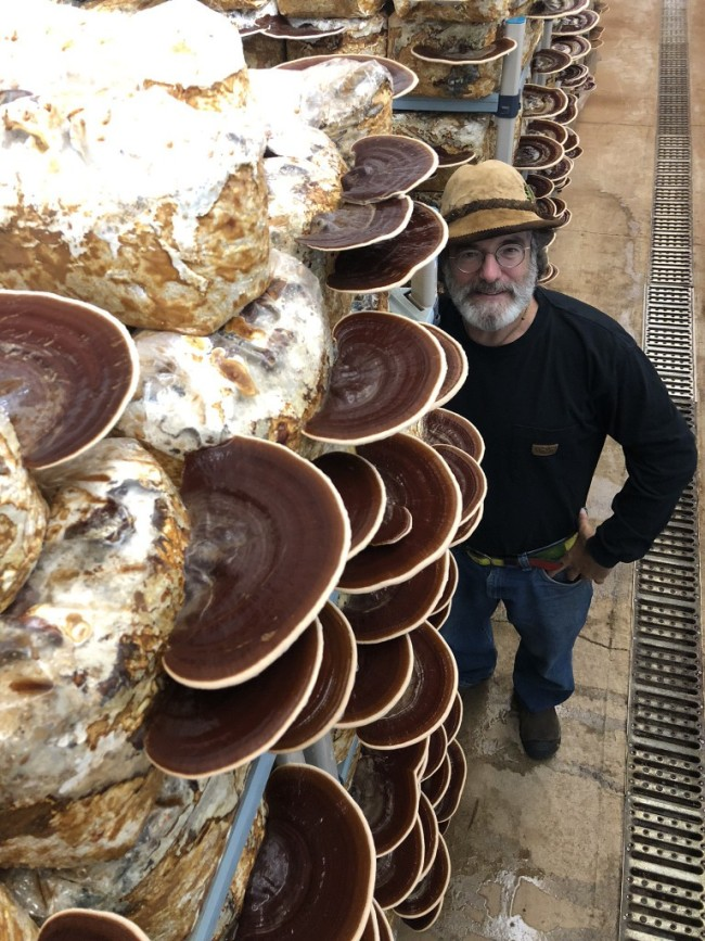 Paul Stamets with cultivated fruitbodies of red Reishi, Ganoderma resinaceum, and wearing a hat made of Amadou, Fomes fomentarius. Extracts from the cultures of these two polypore mushroom species reduced viruses afflicting bees. Credit: Paul Taylor