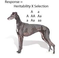greyhoundeugene.jpg
