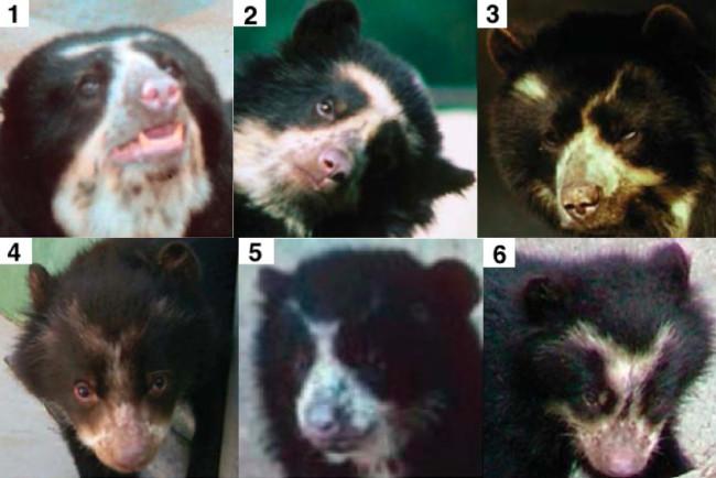 young-bears.jpg