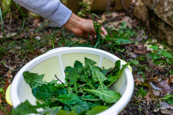 5 Plants With Medicinal Properties in Your Own Backyard
