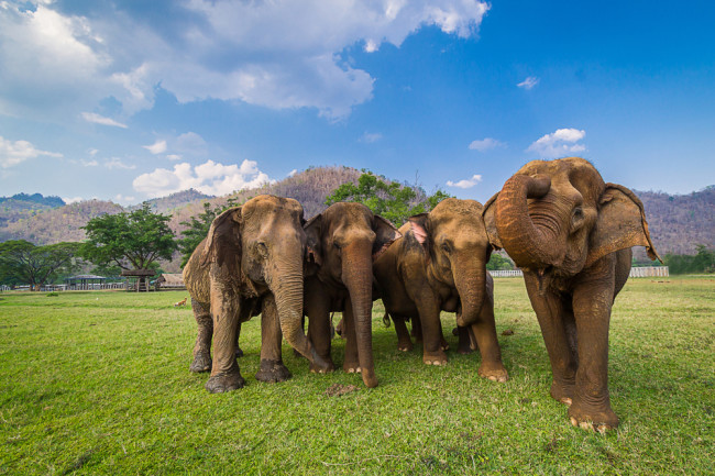 Elephants - Shutterstock
