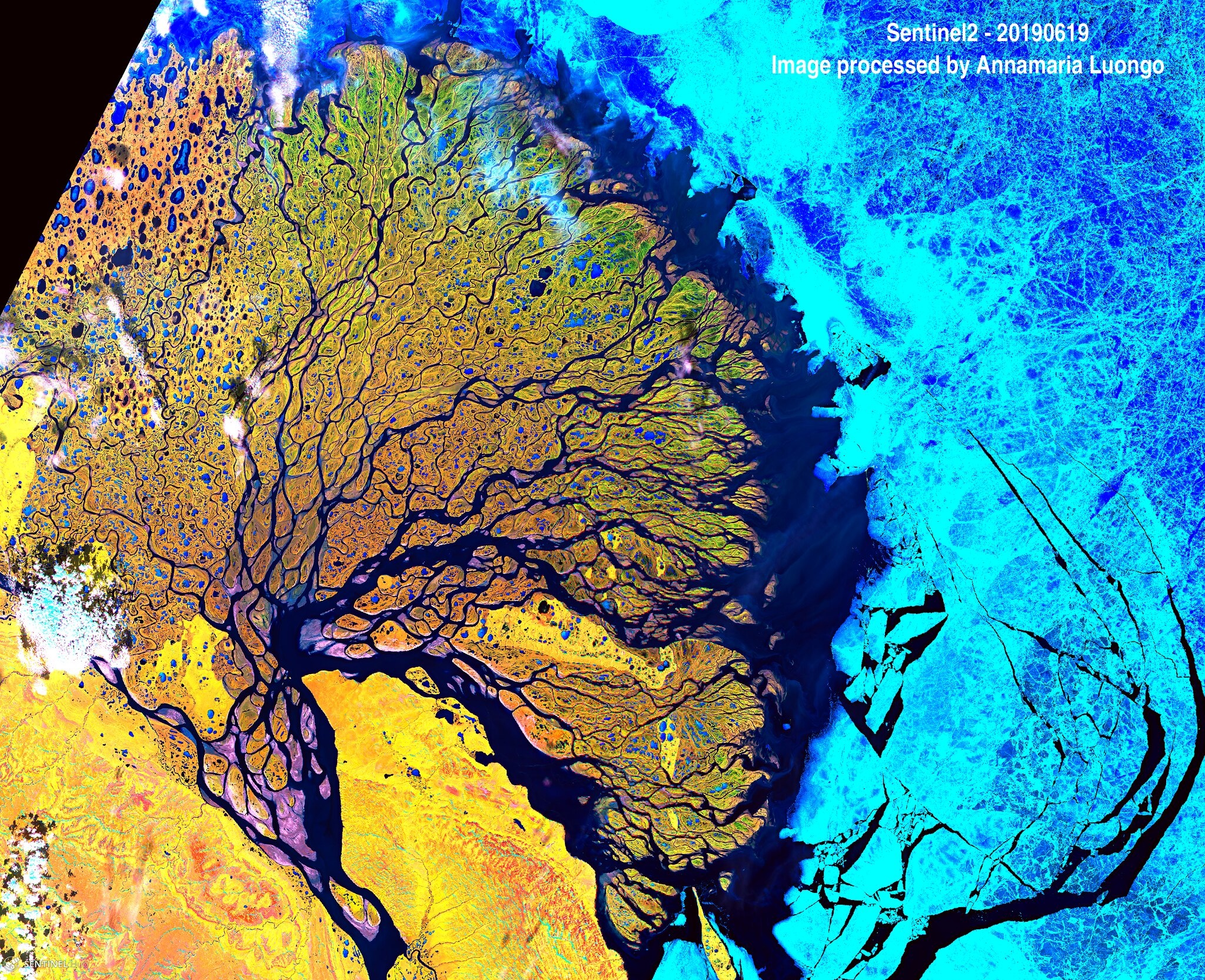 False Color Satellite Image of Lena Delta in Russia