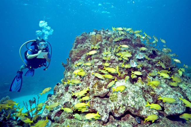 reef.jpg