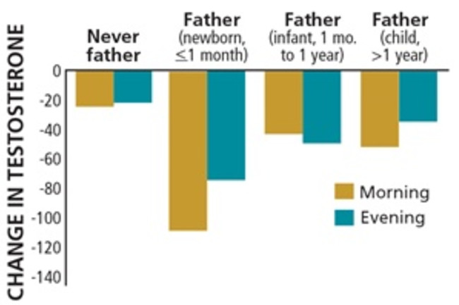 Daddy-Brain testosterone change - Mackey/PNAS