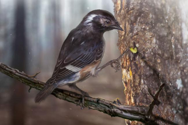 Elektorornis chenguangi Long Toe Amber Bird - Zhongda Zhang