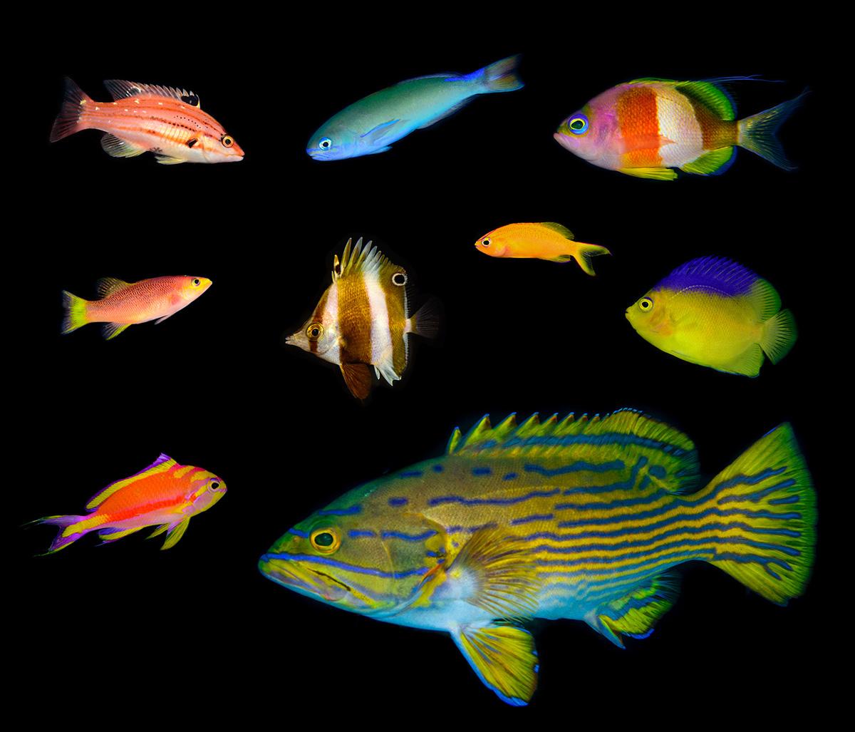 Mesophotic_fishes.jpg