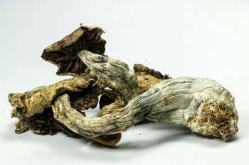 Scientists Cook Up Magic Mushrooms' Psychedelic Recipe