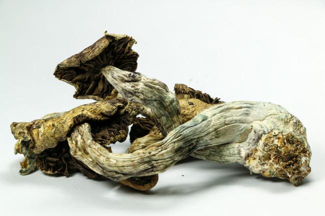 Psychedelic mushrooms. (Credit: atomazul/Shutterstock)