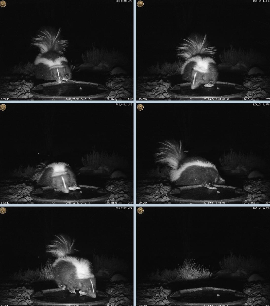 Skunk-Rock-Tool.jpg