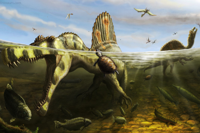 Spinosaurus aegyptiacus trawls for mesozoic fish. Illustration by Brian Engh