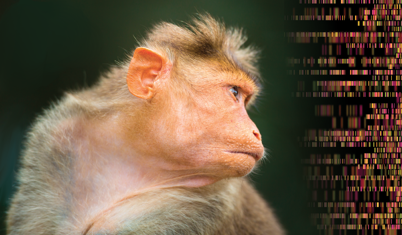 Scientists Put a Human Intelligence Gene Into a Monkey. Other Scientists are Concerned.