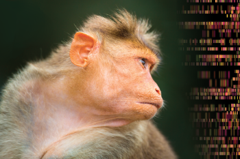 Scientists Put a Human Intelligence Gene Into a Monkey. Other Scientists are Concerned