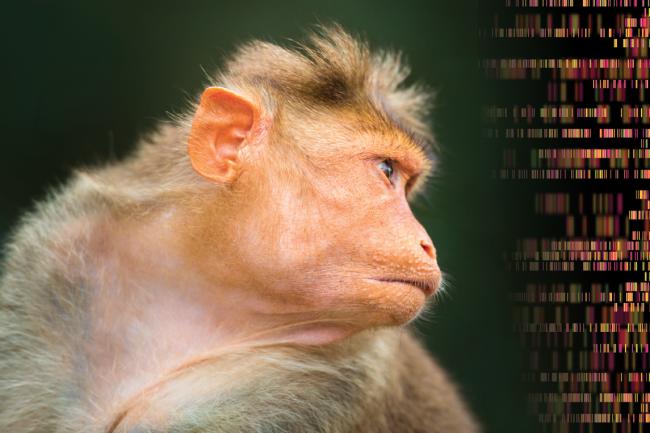 Monkey Barcode - Shutterstock
