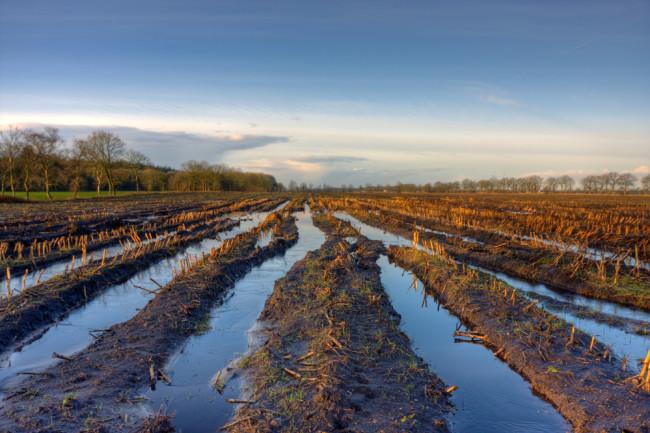 Flooded-Corn-Field