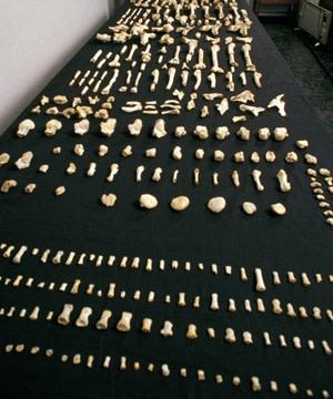 Neanderthal bones, Spain's Sima de los Huesos - Science Source
