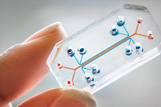 organ-chip.jpg