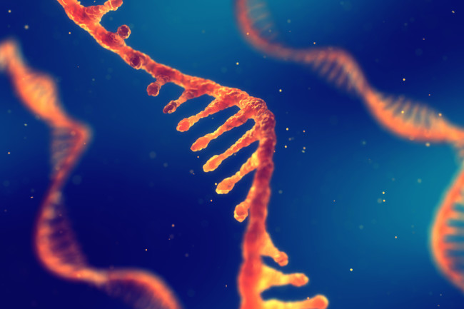 Beyond COVID, the Future of mRNA Is Bright | Discover Magazine