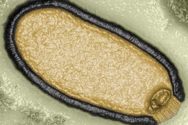 Giant-Virus.jpg
