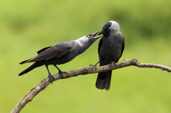 Mates for Life? The More We Learn About Animal Sex, the Rarer True Monogamy Becomes