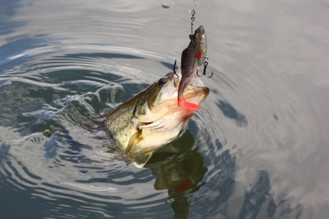 Fish Lure Fishing - Shutterstock