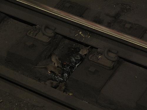 subway-rats.jpg