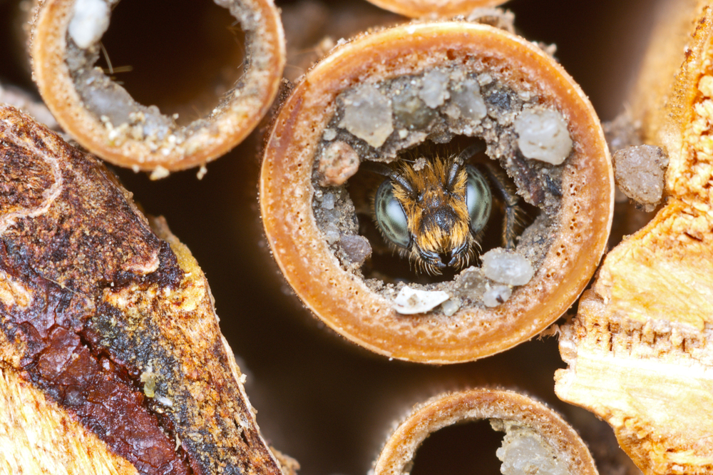 The Fragile Future of Solitary Bees