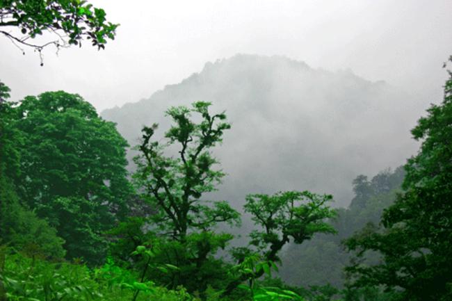 mystforest.png