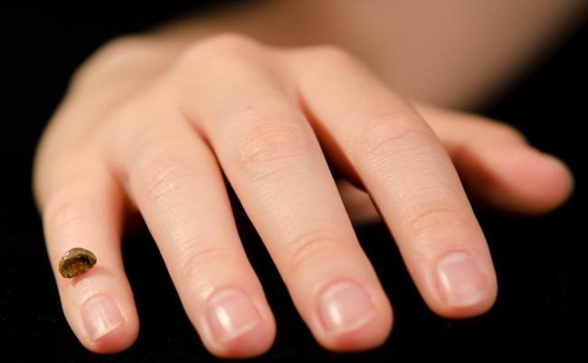 Reconstructed Denisovan finger - Max Planck